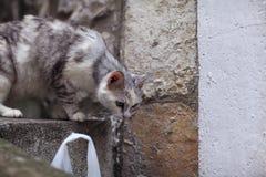 Gato entre los bloques de piedra Foto de archivo libre de regalías