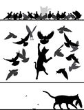 Gato entre palomas Imagen de archivo libre de regalías
