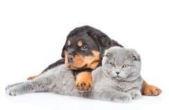 Gato escocés del abarcamiento del perrito de Rottweiler Aislado en blanco Foto de archivo libre de regalías