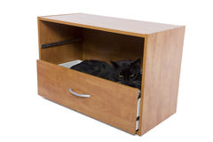 Gato escondendo Imagens de Stock Royalty Free