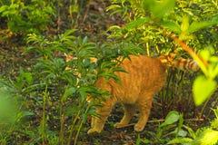 Gato escondendo na grama Fotografia de Stock