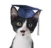 Gato esperto Imagens de Stock Royalty Free