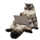 Gato esperto engraçado Imagem de Stock