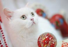 Gato exótico blanco en un interior del ` s del Año Nuevo Retrato cercano Fotos de archivo