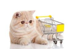 Gato exótico persa con la carretilla de las compras aislada en el fondo blanco Imagen de archivo libre de regalías