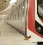 Gato extremo en el ferrocarril fotografía de archivo