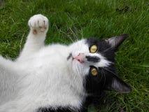 Gato eyed amarillo Imagenes de archivo