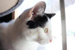 Gato eyed amarillo fotos de archivo libres de regalías