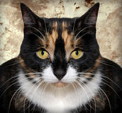 Gato falsificado Imagens de Stock
