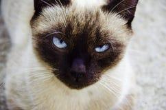 Gato felino Imagem de Stock Royalty Free