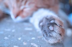 Gato felino bonito em casa imagem de stock royalty free