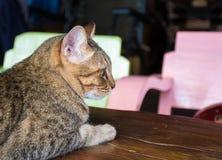 Gato felino en una casa foto de archivo