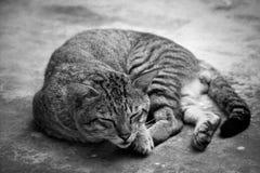 Gato feliz Imagenes de archivo
