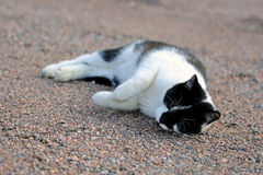 Gato feliz Fotografía de archivo