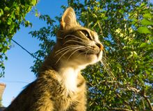 Gato feliz y del consentimiento que mira al sol imagen de archivo