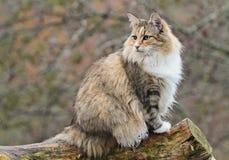 Gato femenino Foto de archivo libre de regalías