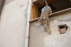 Gato feroz da rua Imagem de Stock
