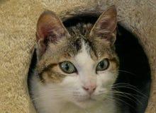 gato Fijo-observado imagenes de archivo