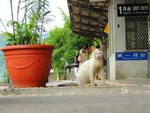 Gato fino blanco en la estación de Shifen Imagen de archivo