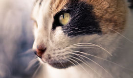 Gato fresco Fotografia de Stock