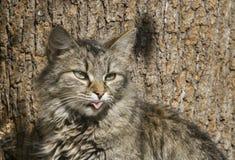 Gato fresco Imagens de Stock