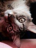 Gato fresco fotos de archivo libres de regalías