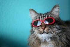 Gato fresco con las cortinas Foto de archivo libre de regalías