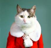 Gato fresco de tom en chimenea de la ropa de Papá Noel Fotografía de archivo libre de regalías
