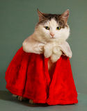 Gato fresco de tom en chimenea de la ropa de Papá Noel Fotos de archivo libres de regalías