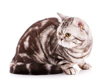 Gato fresco en un fondo blanco Cat Portrait excelente hermosa foto de archivo libre de regalías