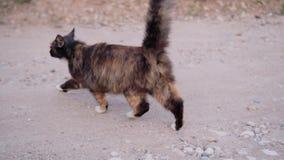 Gato fresco que corre na estrada ao lado do operador Close-up bonito no movimento Animal surpreendente filme
