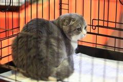 Gato fright imagen de archivo libre de regalías