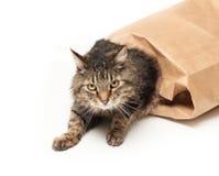 Gato fuera del bolso Imágenes de archivo libres de regalías