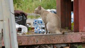 Gato fumarento bonito desabrigado na rua gasto para os pobres vídeos de arquivo