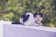 Gato furado Fotos de Stock