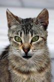 Gato furioso Foto de archivo