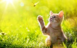 Gato/gatito de Art Young que caza una mariposa con el Lit trasero Foto de archivo libre de regalías