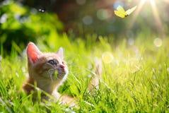 Gato/gatito de Art Young que caza una mariquita con el Lit trasero Imágenes de archivo libres de regalías