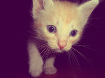 Gato, gato animal Fotografia de Stock