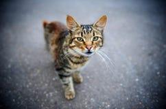 Gato Glaring imagen de archivo libre de regalías