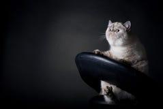 Gato gordo Foto de archivo libre de regalías