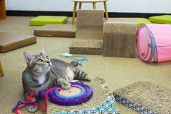 Gato gordo Imágenes de archivo libres de regalías