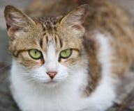 Gato grávido Foto de archivo