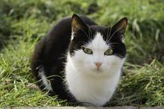 Gato grande. Foto de Stock