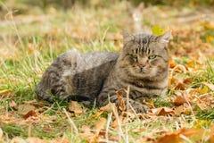 Gato grande de um abrigo Imagem de Stock