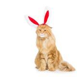 Gato grande del jengibre en el borde principal de los oídos de conejo de la Navidad Fotografía de archivo libre de regalías