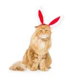 Gato grande del jengibre en el borde principal de los oídos de conejo de la Navidad Fotografía de archivo