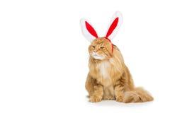 Gato grande del jengibre en el borde principal de los oídos de conejo de la Navidad Imágenes de archivo libres de regalías