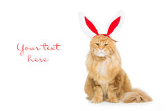 Gato grande del jengibre en el borde principal de los oídos de conejo de la Navidad Imagen de archivo