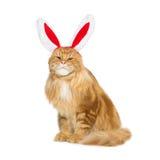 Gato grande del jengibre en el borde principal de los oídos de conejo de la Navidad Imagen de archivo libre de regalías